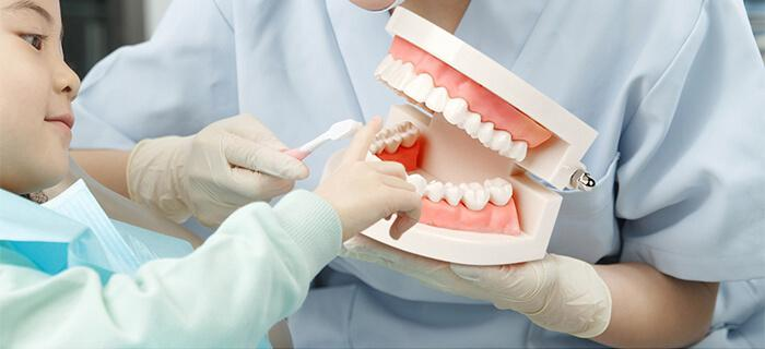 Dental Standard Teaching Denture Model for Children